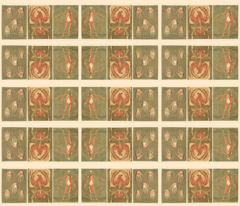 anatomy triptych fabric by northern_scout_vintage on Spoonflower - custom fabric