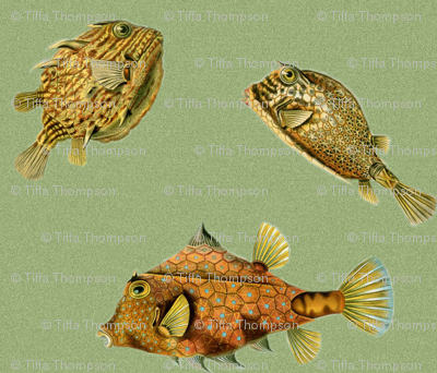Math Sea Creatures