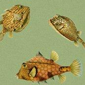 Rrhaeckelfish14new_shop_thumb