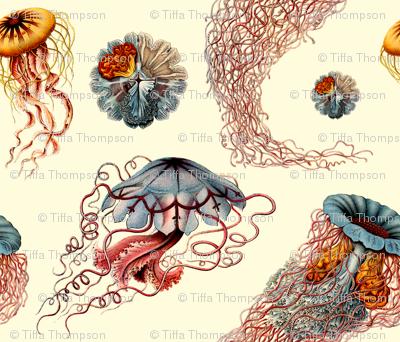 haeckel jellyfish white