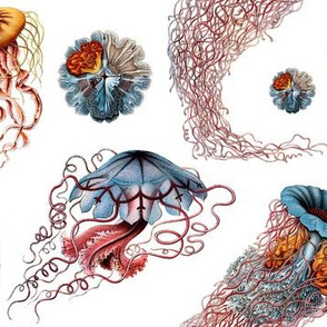 haeckel jellyfish white