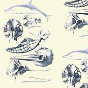 Rrrdolphin_anatomy_shop_thumb