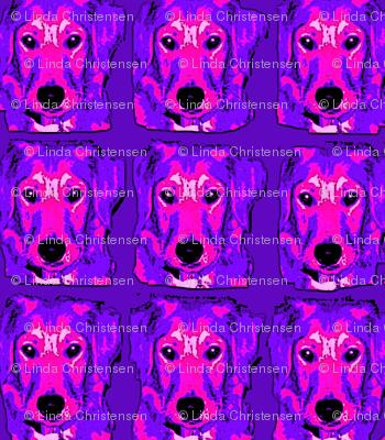 BooBoo Dog