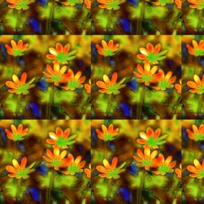 Photoshopped Flowers