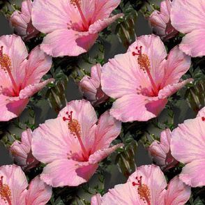 hybiscus_pink_material_pattern