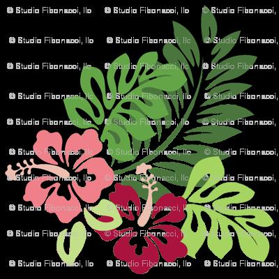 Hibiscus (White Background)