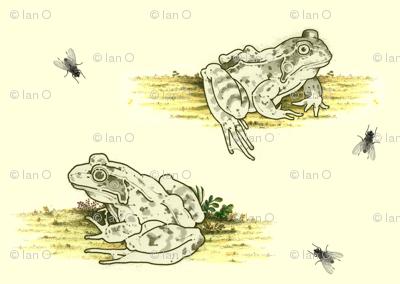 frogpattern
