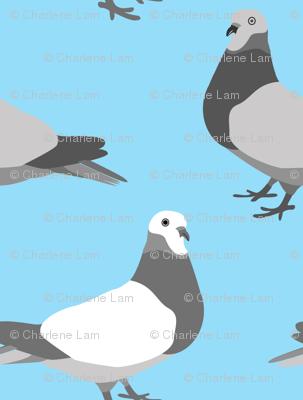 Pigeon Parade, Bright Blue