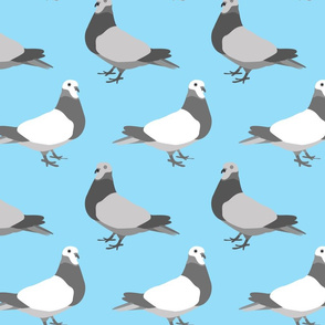 Pigeon Parade, Bright Blue