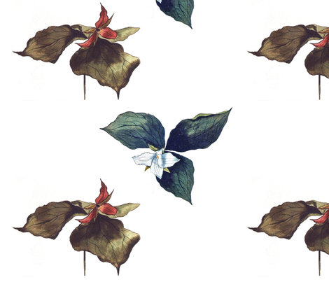 2 TRILLIUM fabric by sallieb on Spoonflower - custom fabric
