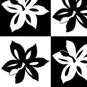 Black checker Hibiscus