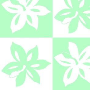 Green Checker Hibiscus