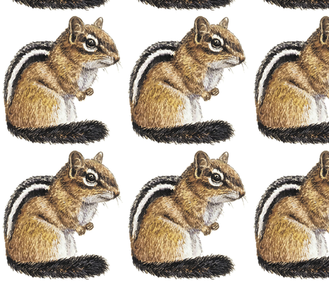 chipmunk fabric by kristenmary on Spoonflower - custom fabric