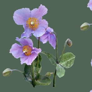 Lilac-poppy-on-sage-green