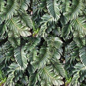 greenfoliage