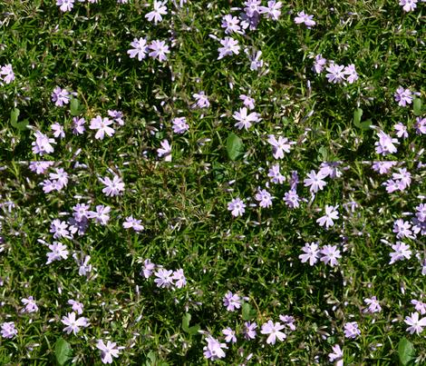 Creeping phlox fabric by serenity_ii on Spoonflower - custom fabric