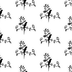 parrot vine