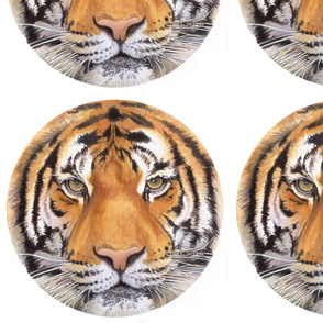 """Tiger Spot"" Watercolor Paul Jackson"
