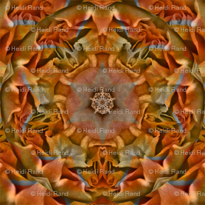 butterscotch_and_heirloom_rose_collage_buzz