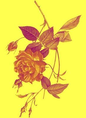 Sunshiny Rose