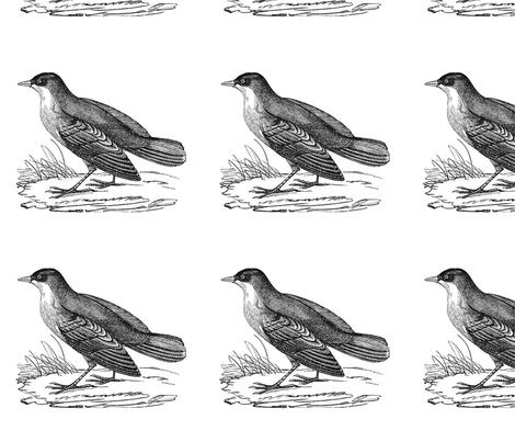 bird3 fabric by earwig on Spoonflower - custom fabric