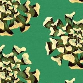 Lg succulent