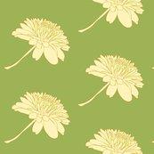 Rrrchrysanthemum_ed_shop_thumb