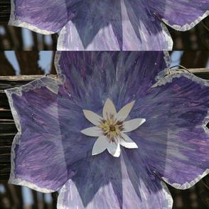 image686