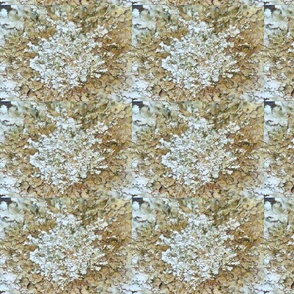 neutral lichen