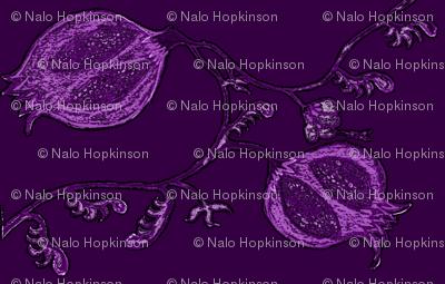 Pome, purple