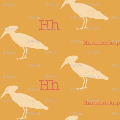 H is for Hammerkop