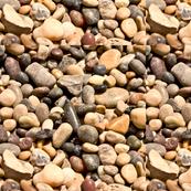 Pebble_Beach_Tiff_with_Lab