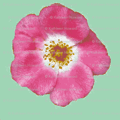 single pink rose lt green_09_004