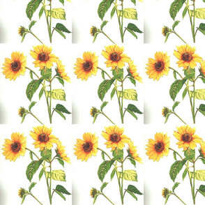 yellow_sunflowers