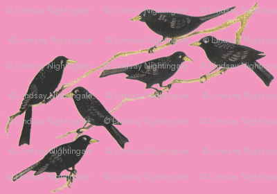 Blackbirds on pink