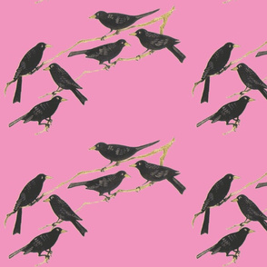 Blackbirds on pink