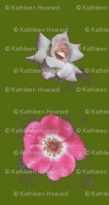 Picnik_collage_roses-ch