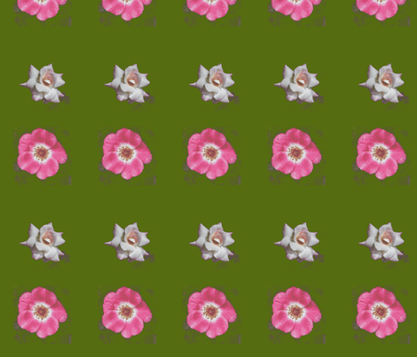 Picnik_collage_roses-ch fabric by khowardquilts on Spoonflower - custom fabric
