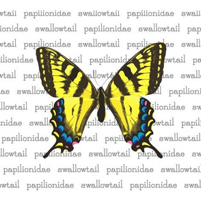 Swallowtail Butterflies with Latin Name
