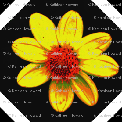B_exp_db_45_single_yellow_dalia_Sept_23_2009_016