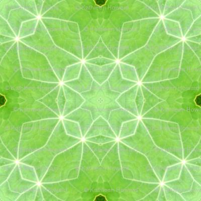 pinwheel_nas_leaves_45_Picnik_collage