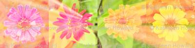 circle_splash_4_zinnias_row_Picnik_collage