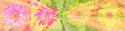 24 circle_splash_4_zinnias_row_Picnik_collage-ch