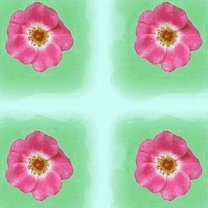 Copy1_of_rose w/o