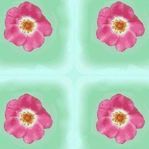 Copy1_of_rose_09_004-ch-ed-ch-ed-ch