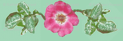 pink_single_rose_leaves_Picnik_collage-ch-ch