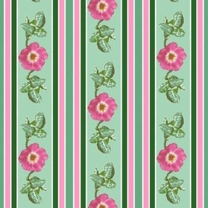 pink_single_rose_leaves_edit_stripe_Picnik_collage_preview-ch-ch-ch