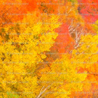 r_45_crop_pair_of_birches___Oct__2009_007
