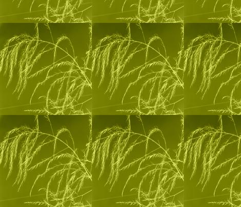 invert_tint_aperagus_fern_003 fabric by khowardquilts on Spoonflower - custom fabric