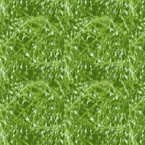 dew drops_aperagus_fern_001-ch